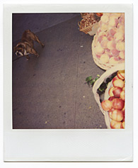 New York City Polaroid Project Image 102